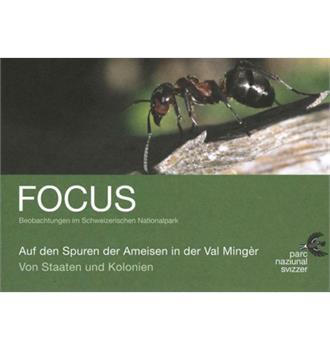 Focus Auf den Spuren der Ameisen in der Val Mingèr