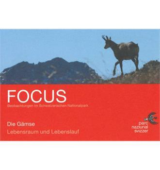 Focus Die Gämse
